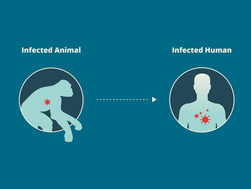 zoonotic diseases pass from animals to humans
