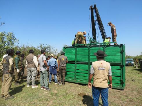 A group of conservation professionals stands outside of a large green relocation carrier and prepares to release the rhino to its new home