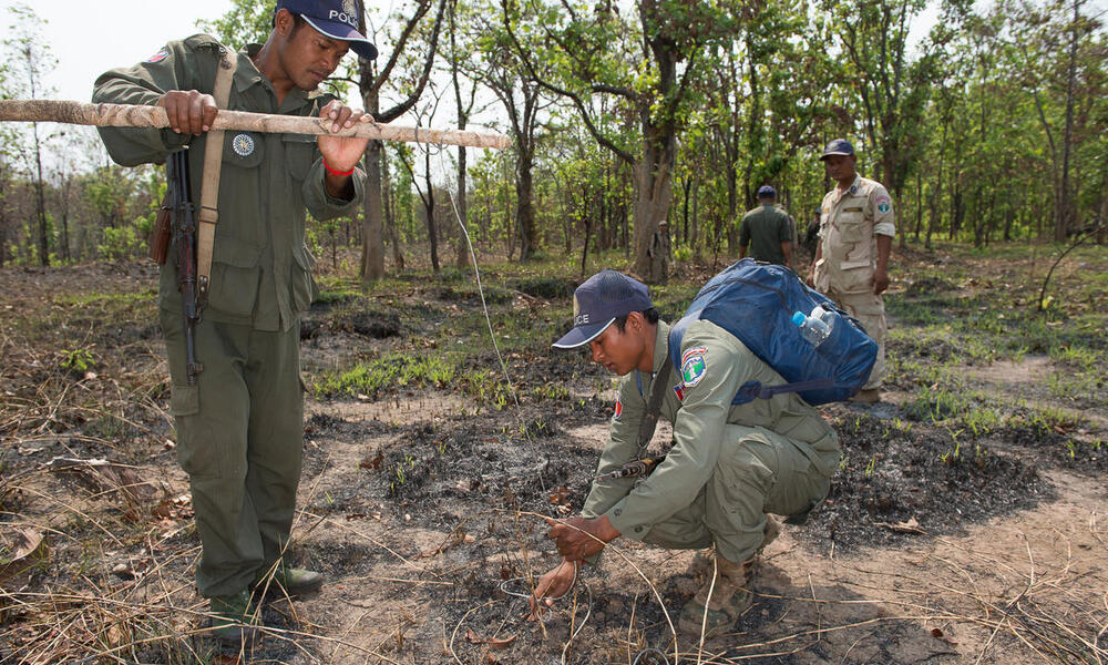 A patrol uncovers and dismantles a snare in Cambodia.