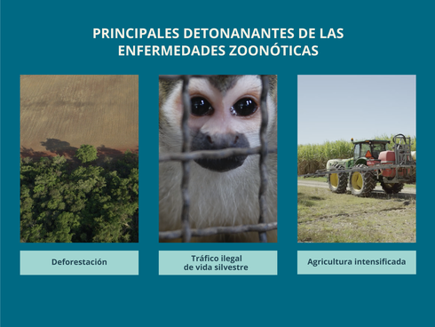 Zoonotics drivers Spanish