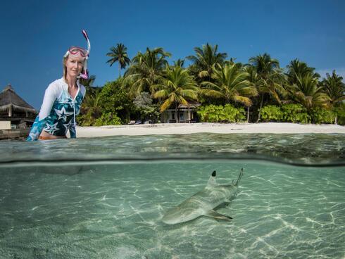 A juvenile blacktip reef shark swims.