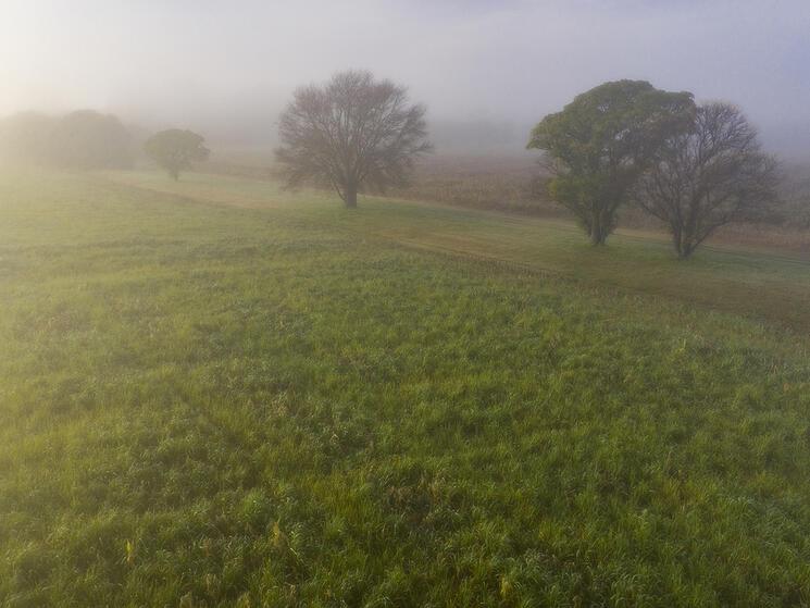 a field at sunrise