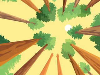 Illustration looking up at trees and sky
