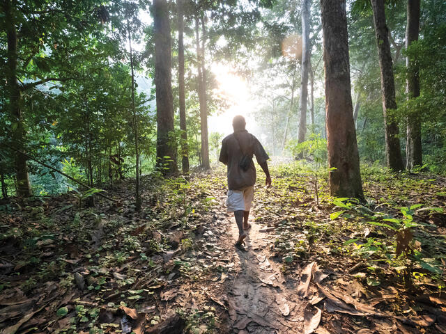 Man walking away on forest trail