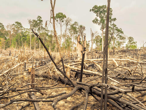 Tress burned and broken in a forest