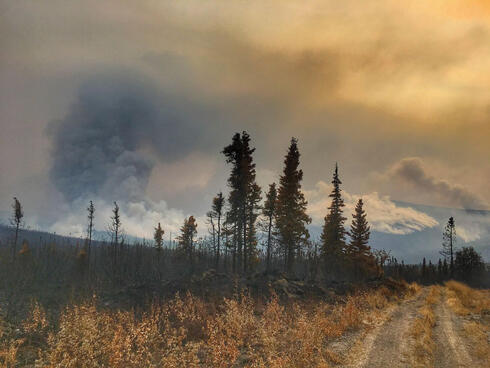 Smoke over mountains with burned trees in foreground