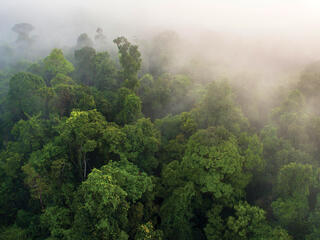 Landscape of forest canopy from above