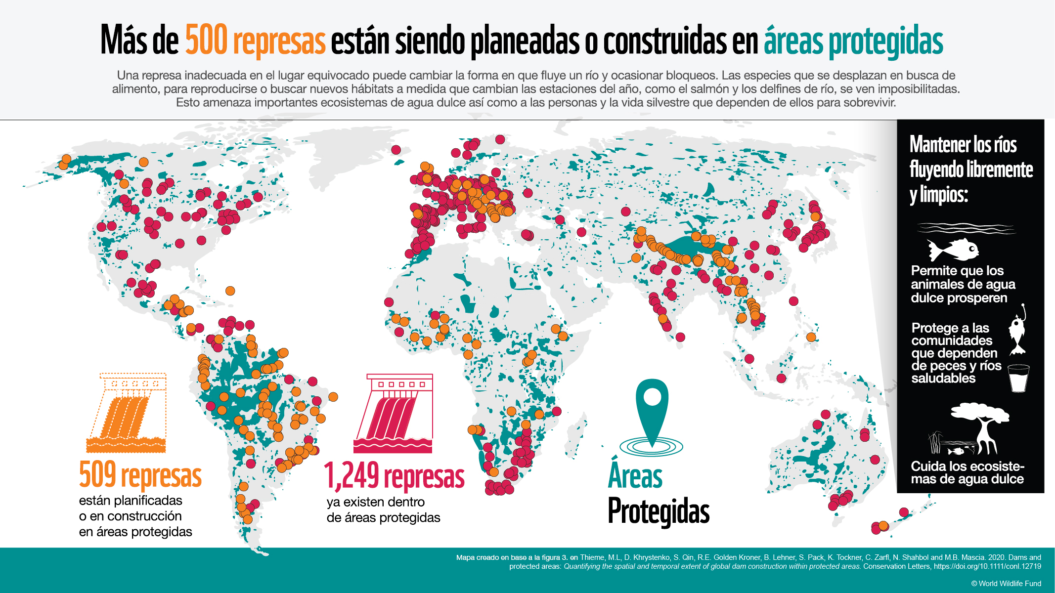 Infographic showing of the global map where ver 500 new dams are planned for development in protected areas. 1,249 red dots across the world represent existing dams, and 502 orange dots across the world represent new dams in plan.