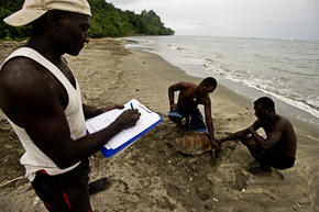 Turtletagging and monitoring in Solomon Islands.