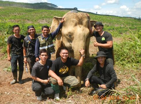 A team of conservationists stands with an elephant they've collared