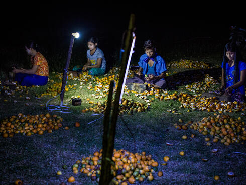 Seated workers sorting betel nuts at night by light of electric lamps