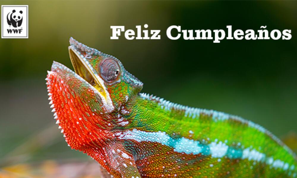 Chameleon ecard in Spanish