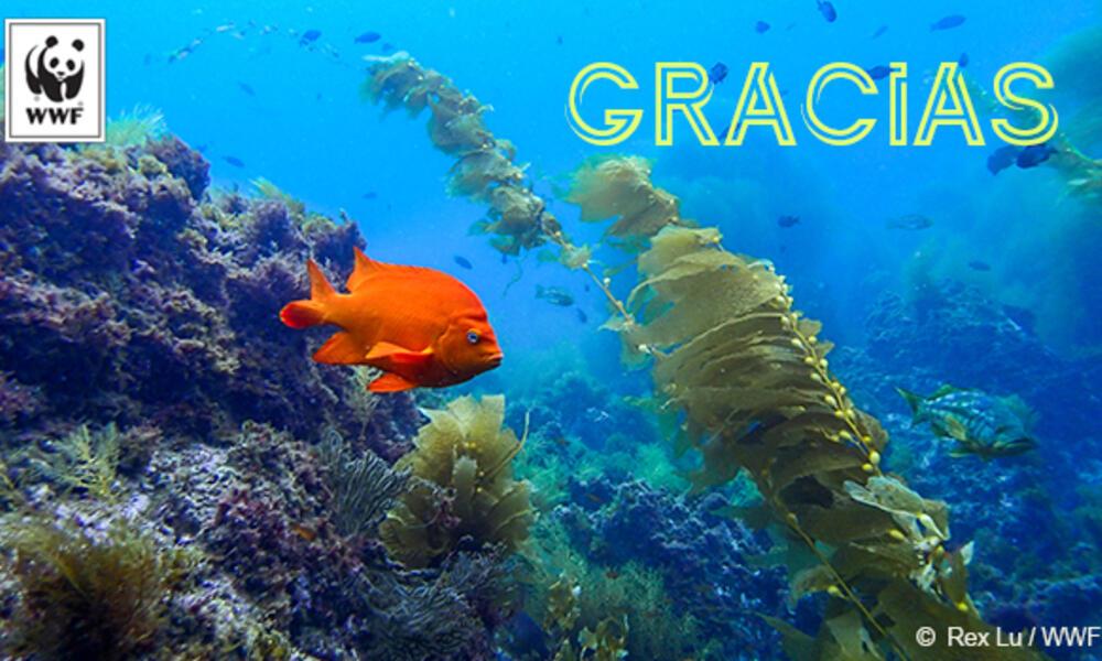 Garibaldi fish Spanish ecard