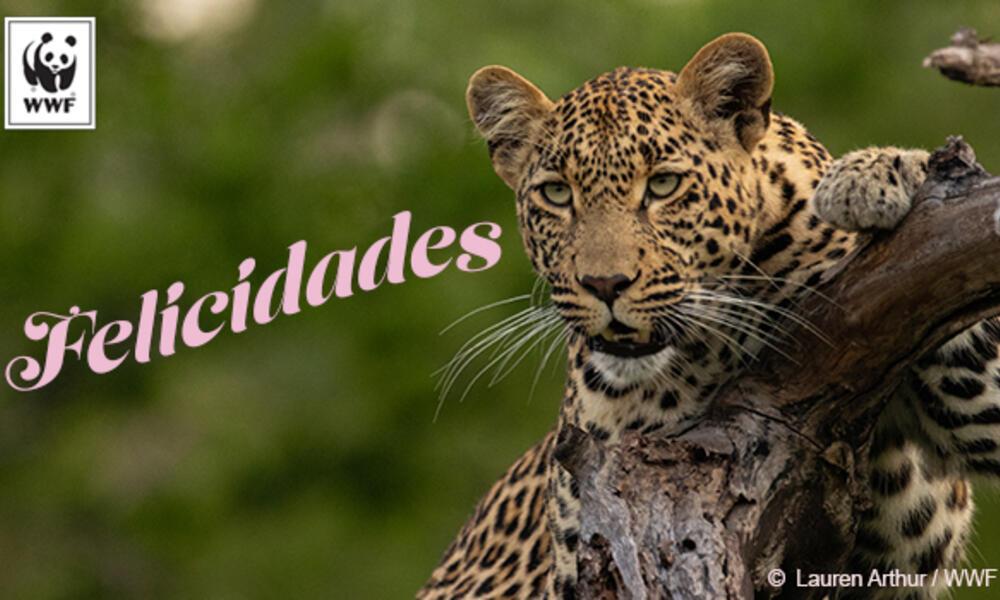 Jaguar Spanish ecard