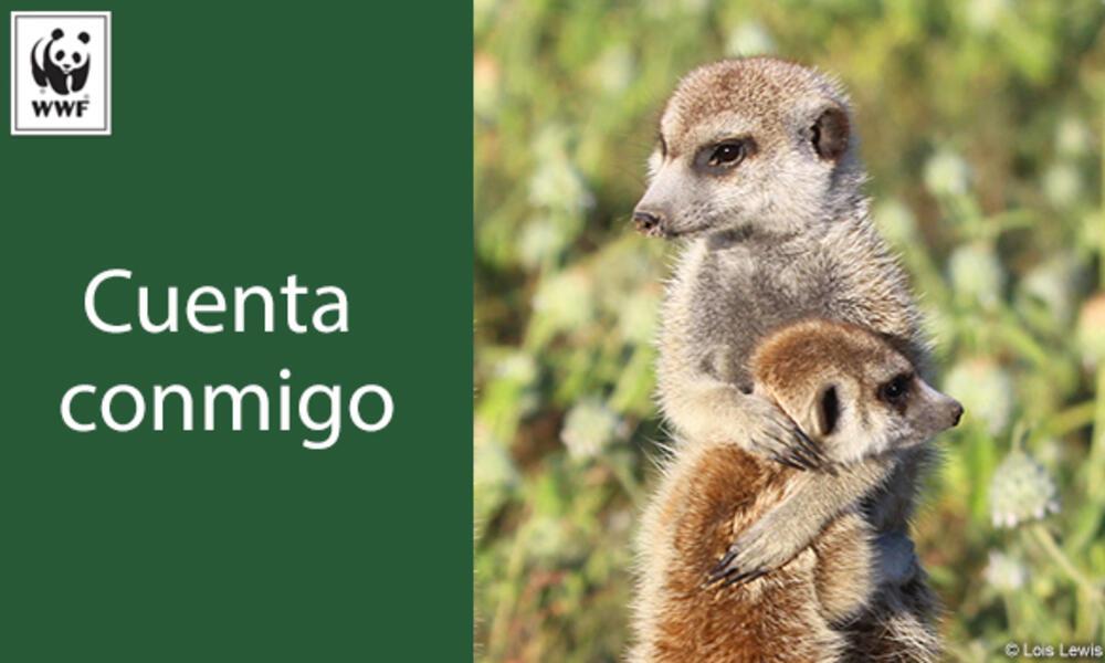 Meerkat ecard in Spanish