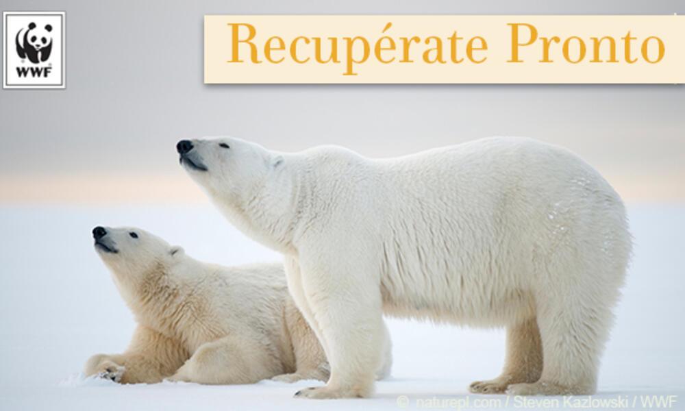 Polar bear ecard in Spanish