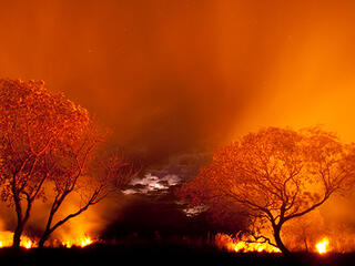 Fire burning in Pantanal