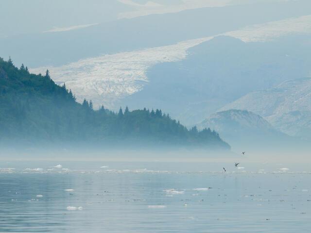 Glaucous-winged gulls landing on iceberg growlers in Resurrection Bay, Alaska