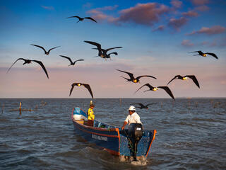 Two men drive out into the ocean in their shrimp fishing boat surrounded by sea birds flying along above them.