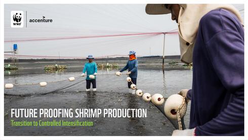 Report cover shrimp fisherman