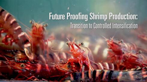 Video thumbnail closeup of shrimp