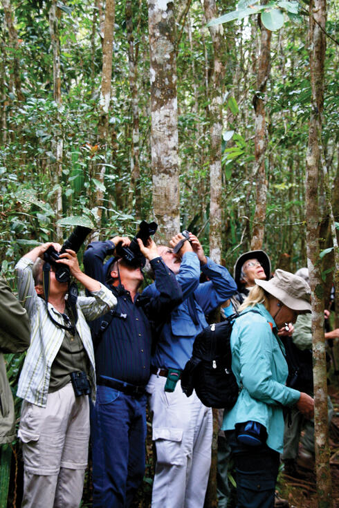 Photographers looking up into trees