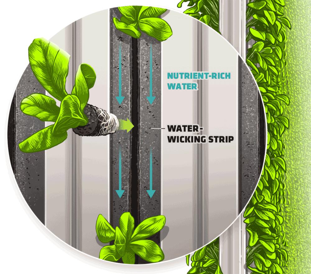 Closeup of hydroponics system
