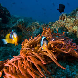 Help Coral Reefs by supporting WWF