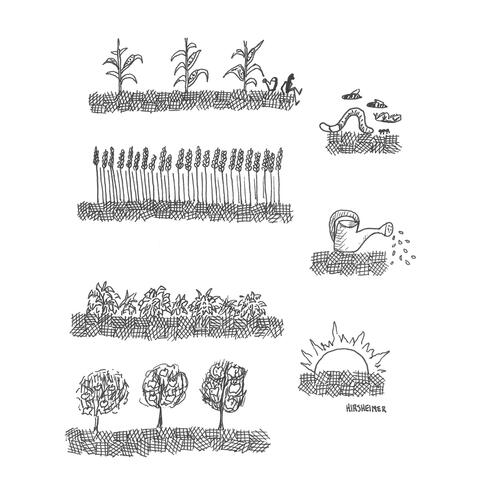 Line drawing of plants and sun