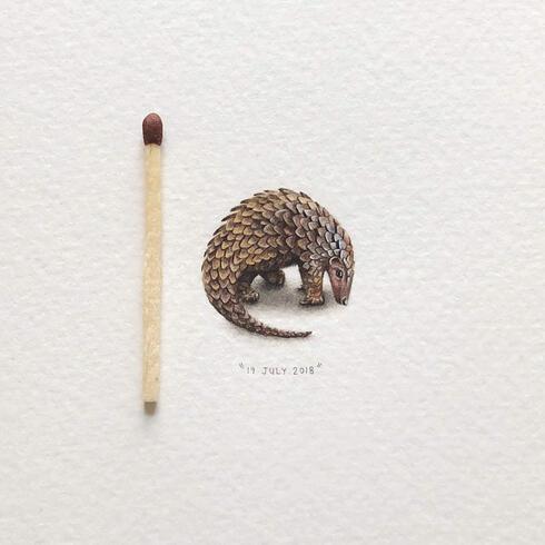 Illustration of pangolin next to match