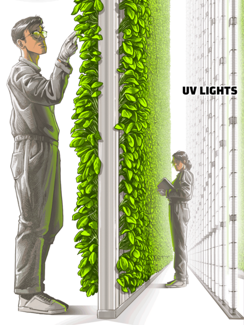 Illustration of farmers examining plants on vertical hydroponics frame