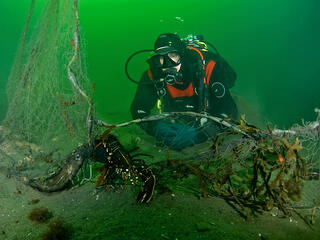 Underwater view of a SCUBA diver looking over a dead lobster caught in abandoned ghost fishing gear