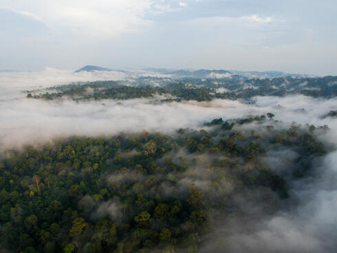 Aerial view of forest treetops with swirling clouds amond the treetops and a mountain range in the distance