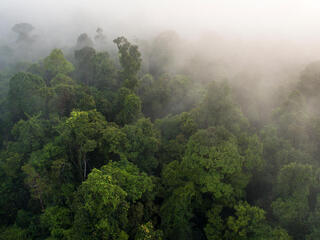 Aerial view of misty treetops in the Sumatran forest