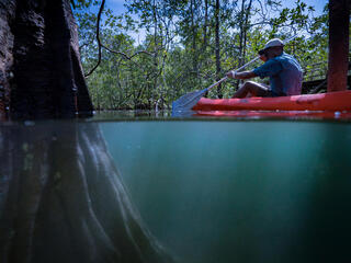 A man in a red kayak moves through mangroves, partial view of the root system underwater