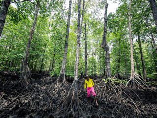 Man in pink shorts and yellow top stands amid a massive mangrove forest