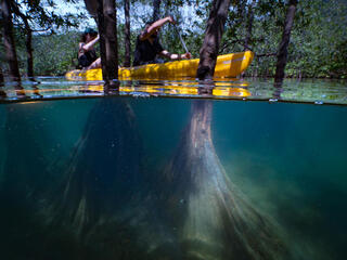 Split under/above water view of two people in a kayak moving through a mangrove forest