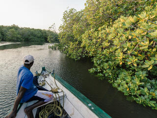 Rear view of a man sitting at the bow of a boat that drives along the outer edge of a mangrove forest