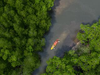 Aerial view of one kayak on a river moving between two large areas of mangrove forest