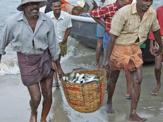 Fisherman returning from sea with their daily catch of fish in a wicker basket
