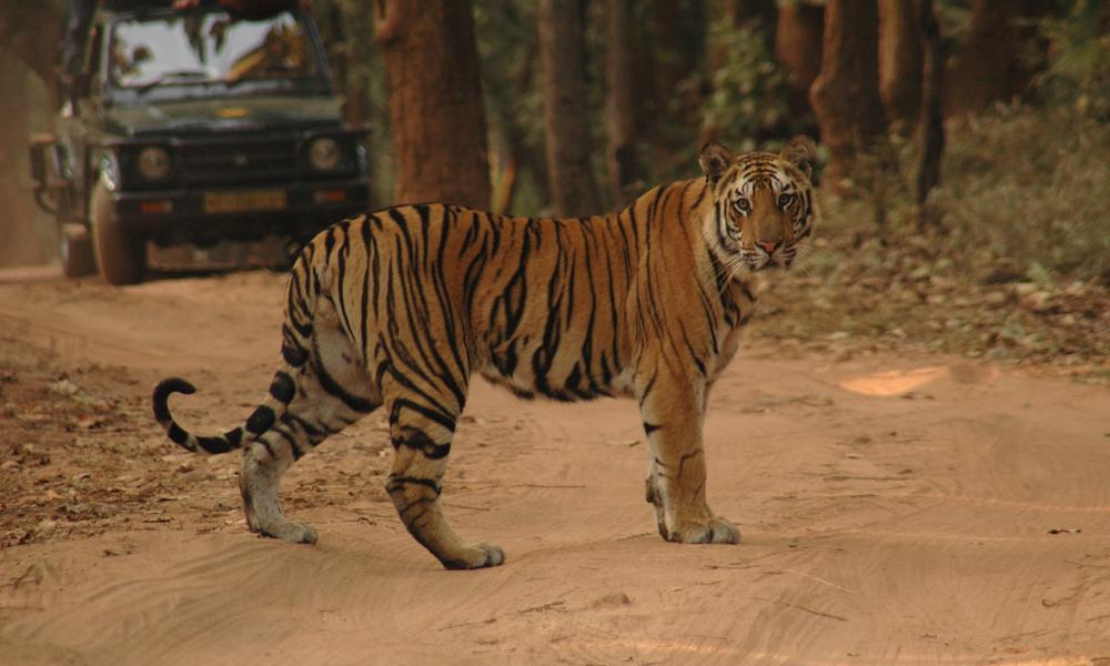 India Tiger Drive