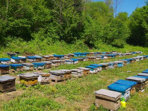Rows of bee hives in green grass in China