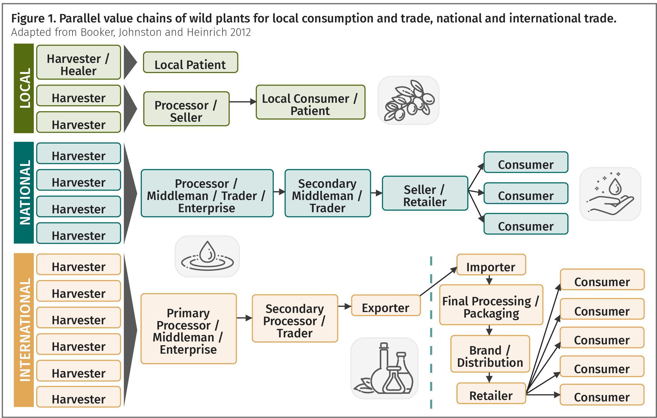 Figure 1. Parallel value chains of wild plants for local consumption and trade, national and international trade.