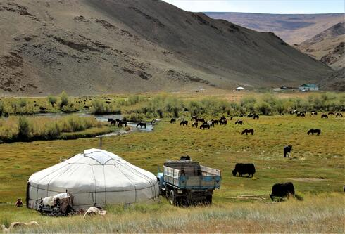 Yak and horses grazing on a vast green field with a brown mountain range in the background and a white tent in the foreground