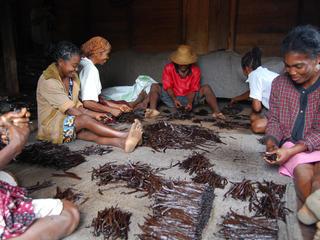 Vanilla farmers