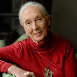 headshot of Jane Goodall