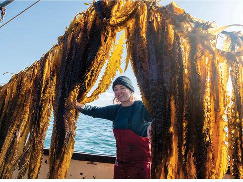 Kelp farmer among hanging catch