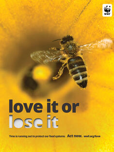 PSA: Image of a bee on a hive with the line 'love it or lose it'