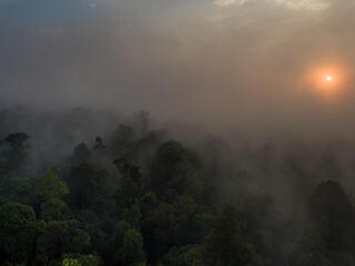 sun rising through mist over Thirty Hills forest in Sumatra