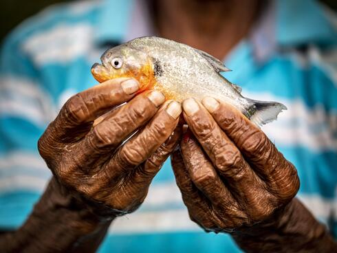 Fisher from the San Luis-La Rompida community in Colombia holds small pirhana fish in his hands